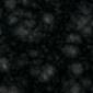 2608-negro